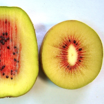 Jingold presenta a Macfrut tre nuove varietà di kiwi