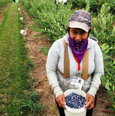 Peru': investimenti nella coltivazione dei mirtilli e nell'export di uva da tavola