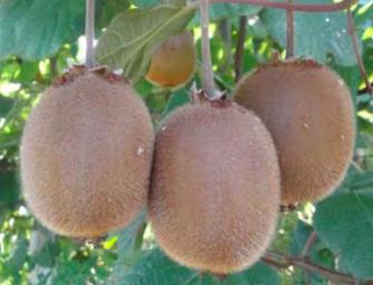 Nasce Fruit Services Coop, tra i soci anche Apofruit e Univeg