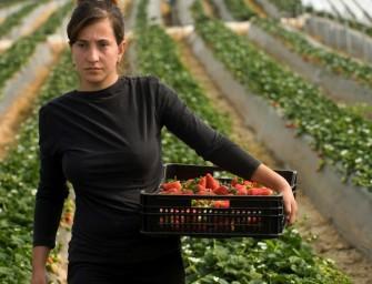 Crisi nera per le fragole di Huelva (Spagna)