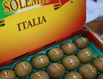 Apofruit Italia, obiettivo 50 mila tons di kiwi in tre anni