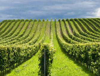 Abolizione dell'Irap agricola nel 2016, boccata d'ossigeno per le imprese