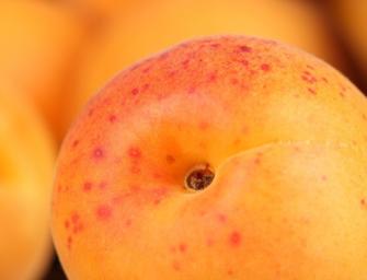 Europech, albicocche: flessione in Italia (-7%), cresce la produzione in Spagna (+12%)