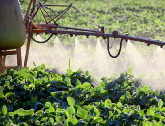 """Spagna, operazione """"Fragola"""": 28 arresti per uso illegale di pesticidi"""