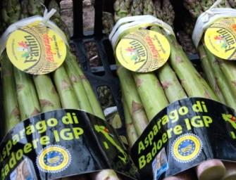 Opo Veneto spinge sull'asparago. Bellò: «Può fare il percorso del radicchio»