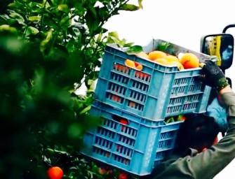 A Expo tante iniziative e un video emozionale sulle eccellenze agrumicole di Sicilia