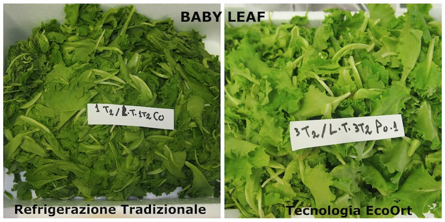Baby Leaf EcoOrt