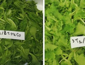EcoOrt: con la refrigerazione passiva e l'ozono migliora la conservazione