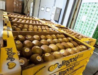 Jingold, accordo con Kingfruit (Ceradini Group) per produrre nel Veronese