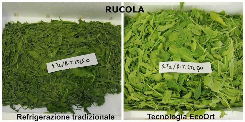 Rucola EcoOrt