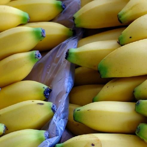 banane cocaina
