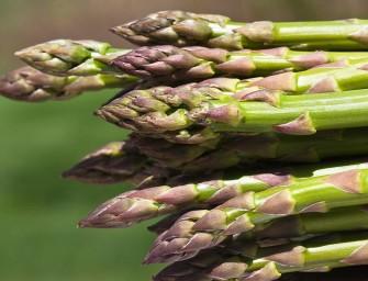 A Cesena Fiera arriva l'International Asparagus Days: convegni, prove in campo, visite tecniche