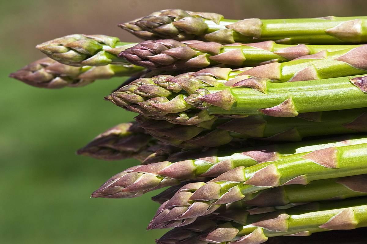 Asparagus Days