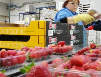 Brio: a Pomezia parte la piattaforma di confezionamento per l'ortofrutta