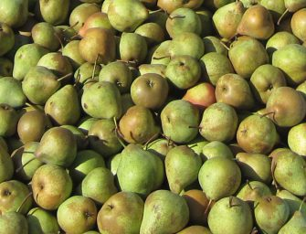 Prognosfruit: pere? Calano i volumi, ma la stagione è promettente