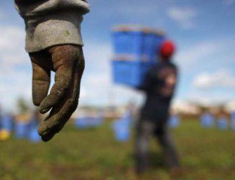 Agricoltura, il lavoro ha un tasso di irregolarità del 50%. Caporalato: i numeri