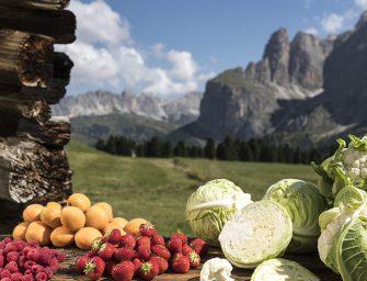 Alto Adige: campagna positiva per fragole e cavolfiore, ciliegie in difficoltà