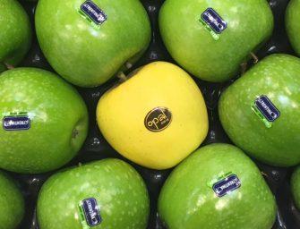 Interpoma e le tante nuove varietà di mela. La strada è quella giusta