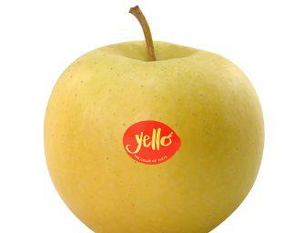 A Interpoma arriva yello: la mela a buccia gialla dal fascino esotico