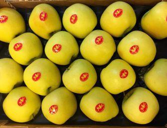 """yello, successo per i primi assaggi della mela premium in Gdo. """"Colore determinante"""""""
