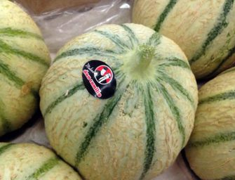 Don Camillo, cresce la coltura del melone in Senegal. Strategica anche la zucca