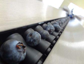 Ac Foods sceglie con successo Blueberry Vision di Unitec