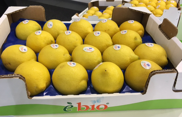 Villari limoni biologici