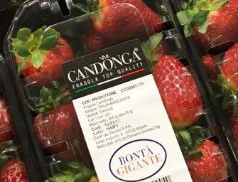 Il Gigante, co-branding con Club Candonga per fragole top a prezzi stabili