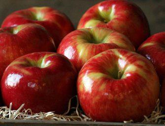 AgroFresh, la mela nel mondo. Nuove cultivar, varietà club e big player futuri