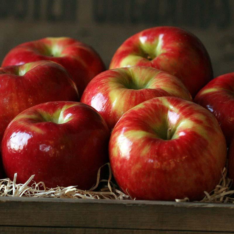 honeycrisp-apples