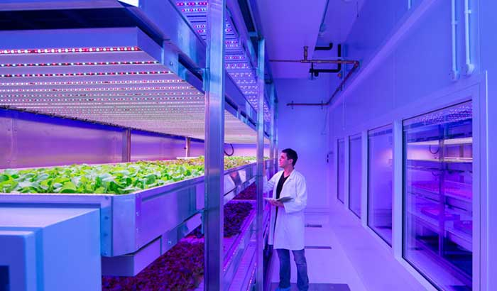Philips-city-farming