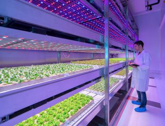 Vertical farming, parte l'Olanda. Su richiesta di Aldi?