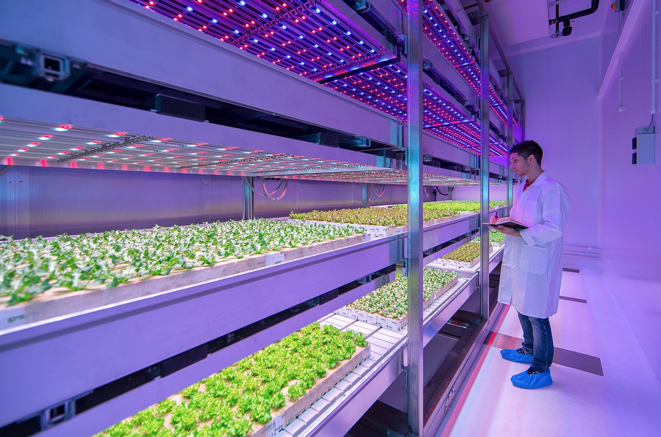 Philips-lighting-vertical-farming