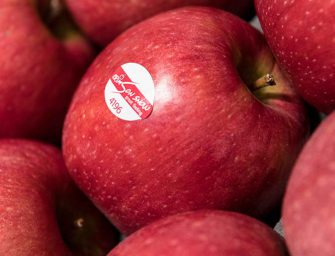 VOG produrrà Crimson Snow, la mela club rossa e croccante che dura tutto l'anno