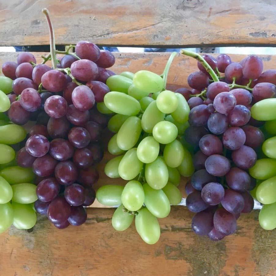 Dichiarazione riguardo alla variet di uva da tavola arraone fruitbook magazine - Uva da tavola bianca ...
