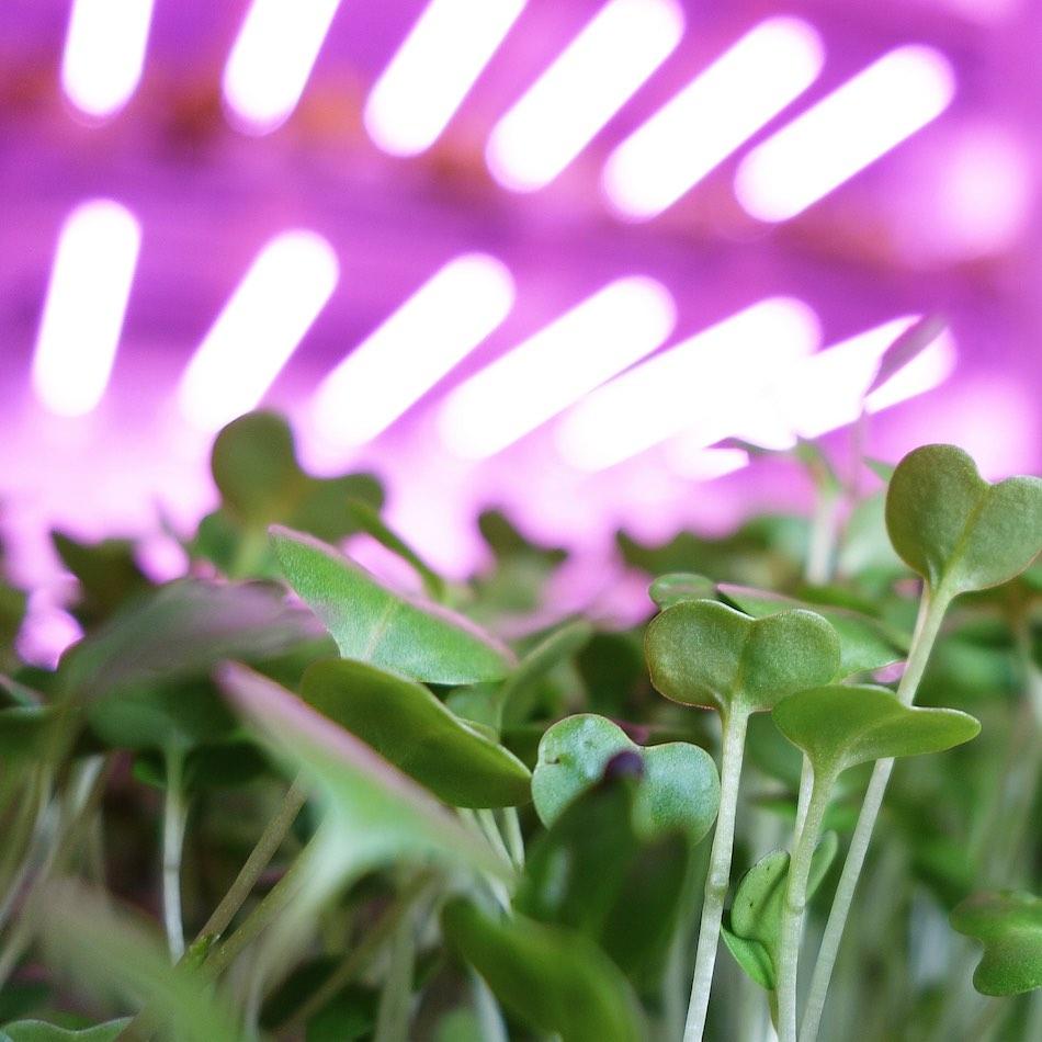 Travaglini-vertical-farming