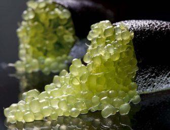 Finger Lime, arriva anche quello made in Italy. Al via la raccolta in autunno