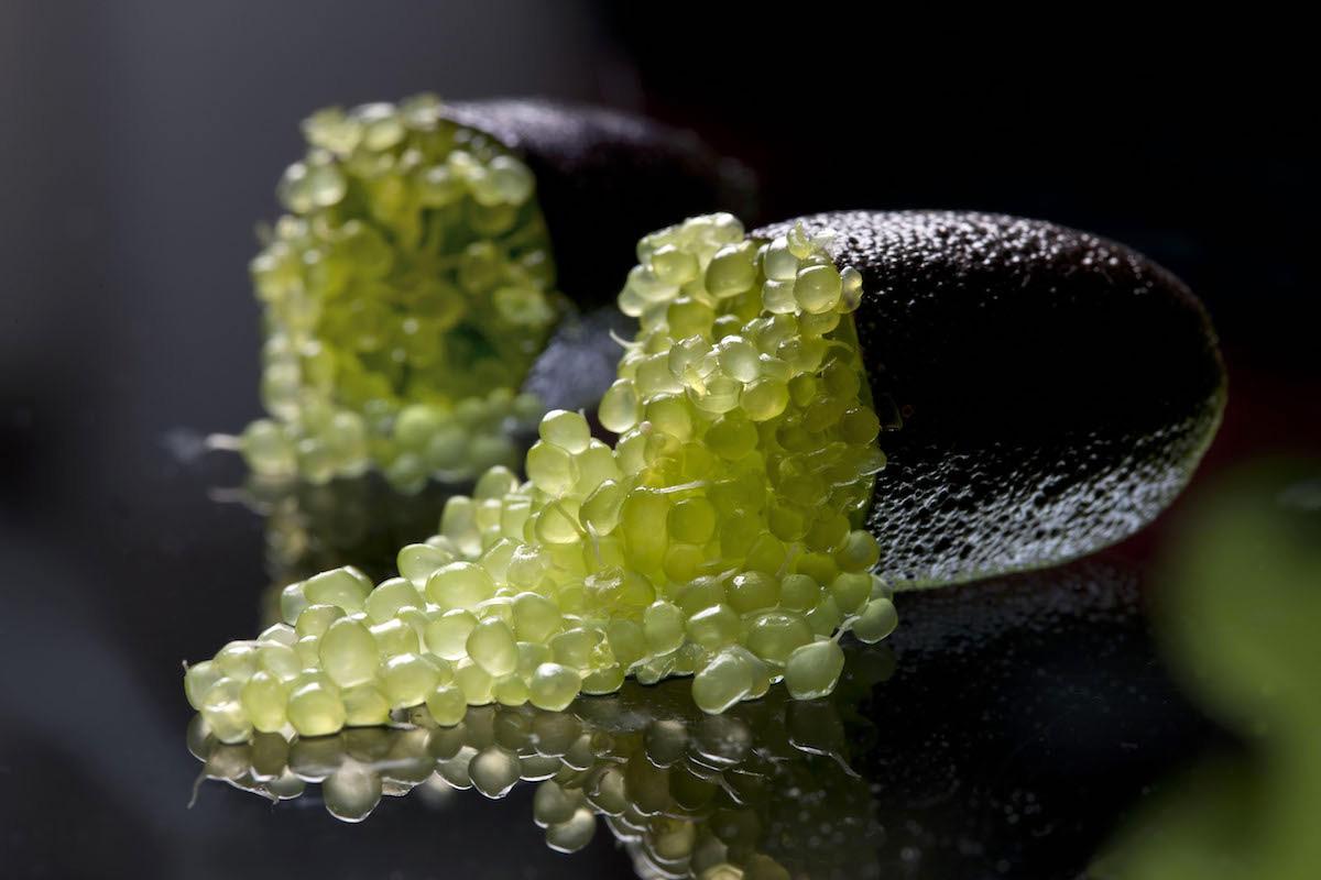 Finger lime arriva anche quello made in italy al via la for Prezzo del ferro al kg oggi
