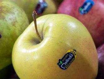 Melinda e La Trentina, è matrimonio anche sulle mele. O è un salvataggio?