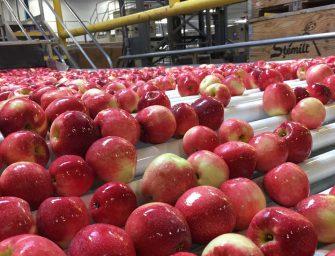 Arriva la nuova mela club SweeTango. Melinda è il primo produttore in Europa