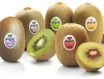 Jingold: nuovi mercati e varietà innovative di kiwi, giallo, verde e rosso