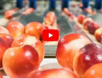 TanyNature (Spagna), più tecnologia per restare leader nella frutta estiva. Il video!
