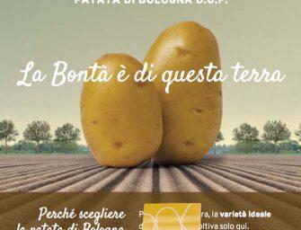 Nuova veste online per la Patata di Bologna: viaggio smart nelle terre del tubero Dop