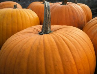 Zucche made in Italy: 40 mila tons./anno. Per Halloween vola l'export (+16%)