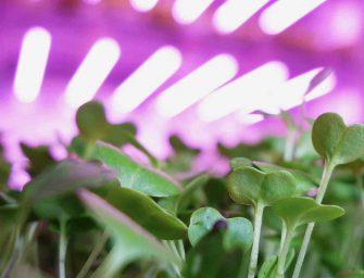 Travaglini Spa, c'è Milano nel futuro del vertical farming internazionale