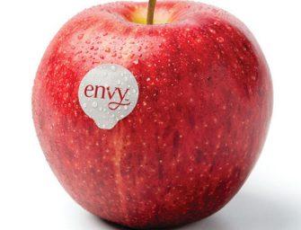 Torna sui banchi Envy, la mela supersweet. 1.500 tonnellate fra Italia e Spagna