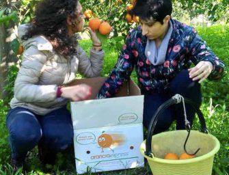 Arancia Express, da Palagonia il gusto degli agrumi di Sicilia viaggia sul web
