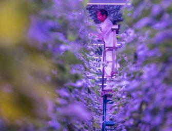 Gandini e la sfida di produrre pomodori al nord tutto l'anno