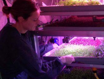 Cavoli su Marte? Sono italiani i primi ortaggi coltivabili sul Pianeta rosso