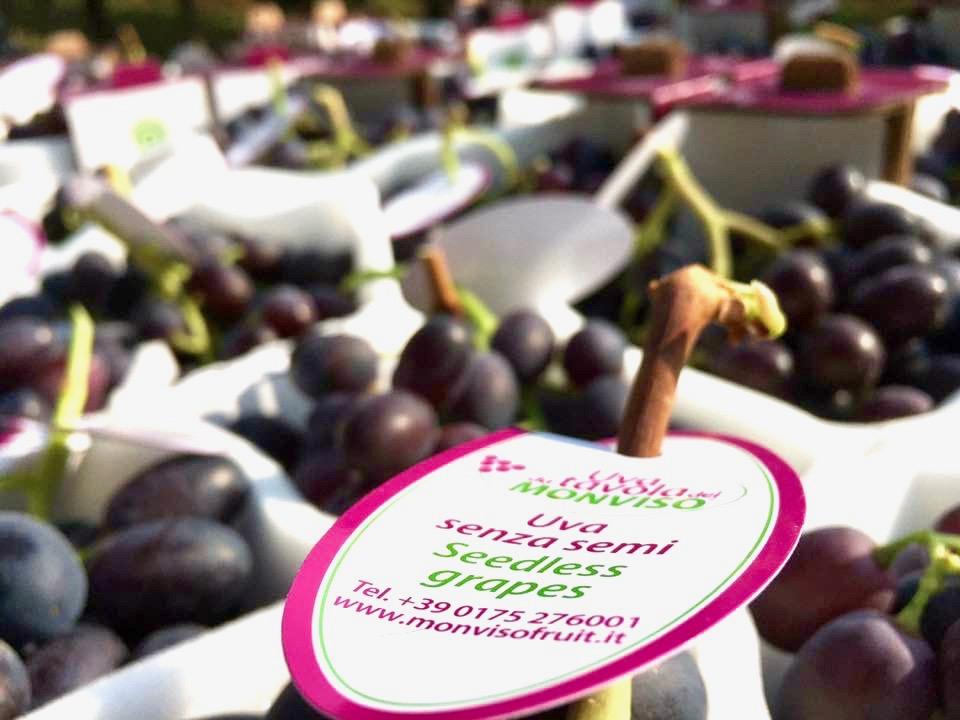 Monvisofruit-uva